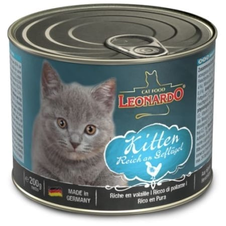 kitten_1_g